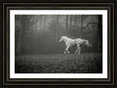 Grey Horse Running in Fog (Framed)