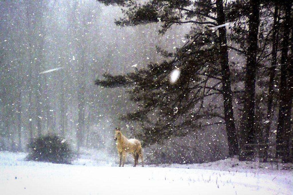 Smoke-in-Snow-w-1024x683.jpg